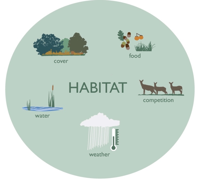 Deer habitat includes many factors such as food, water, shelter, weather, and competition.