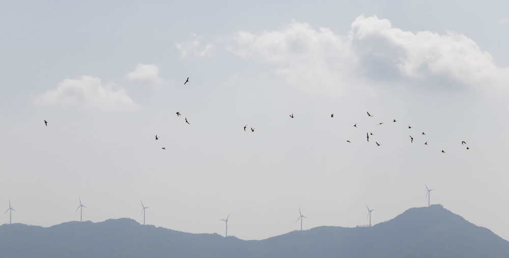 A flock of birds in flight with wind turbines in the background.