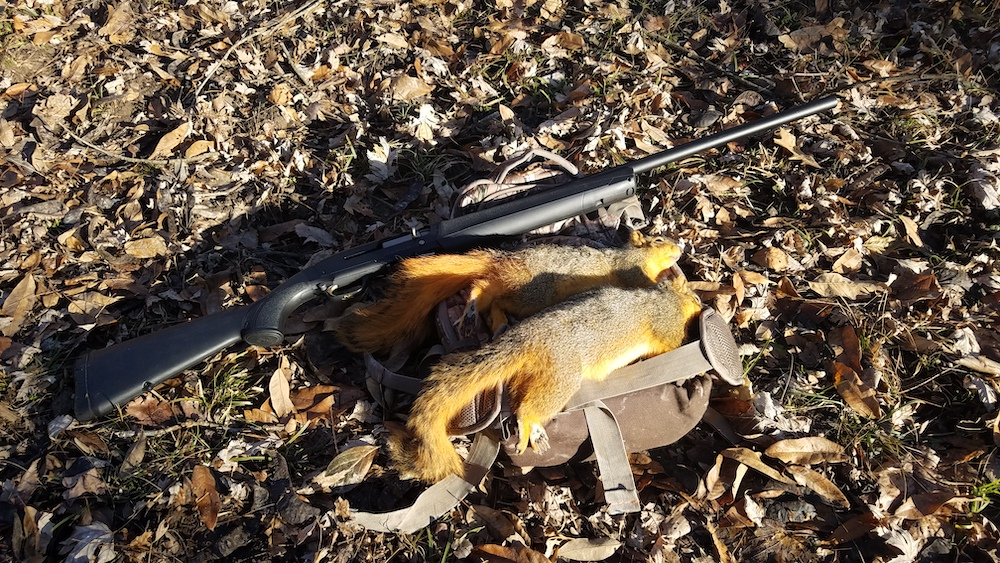 Two orange and grey harvested squirrels on the forest floor next to a firearm.