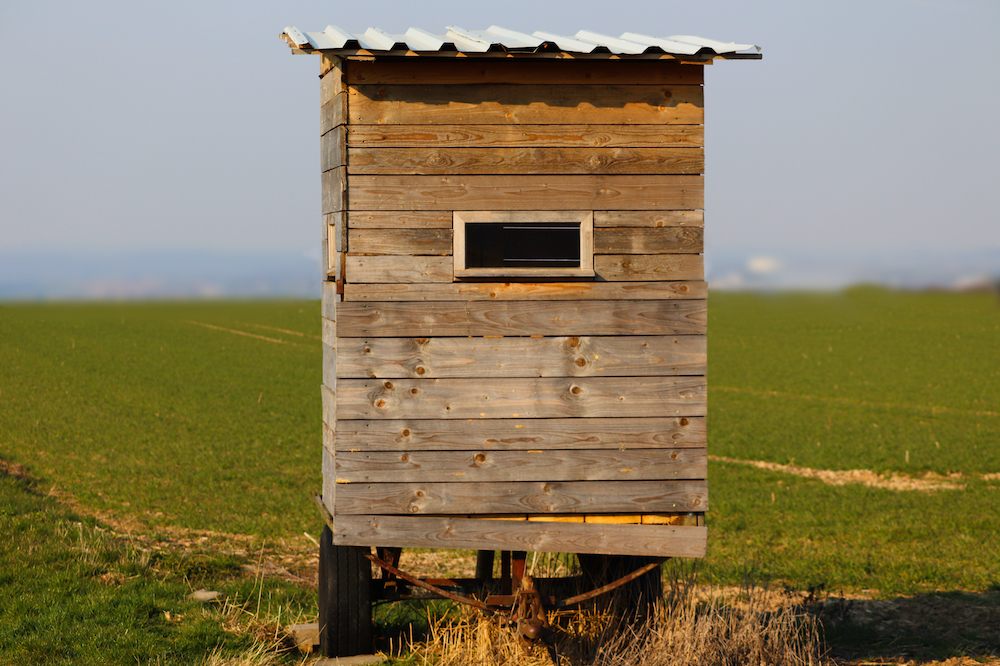 A wooden hunter's ground blind surrounded by green agricultural fields.