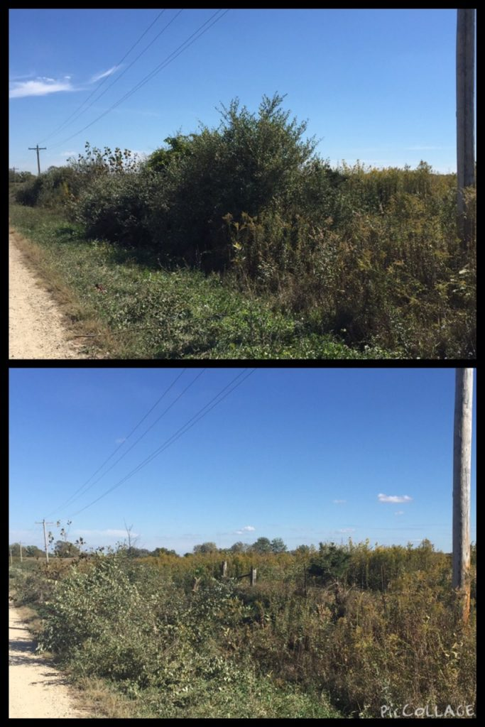 A before and after photo collage. The image at the top is a roadside ditch filled with bushes and weeds. The photo below is the same roadside ditch with the bushes cut down.