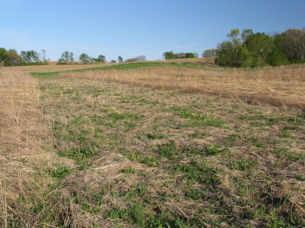 A grassland in early spring. An agricultural field and a blue sky is in the background.