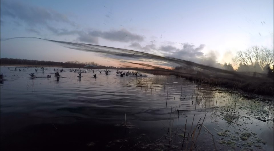 It is early morning at a wetland. The rockets are fired and the net deploys over fleeing wood ducks.