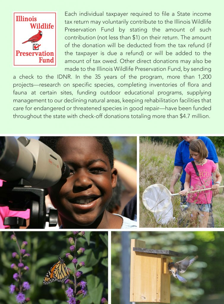 A graphic with text on a green background, and underneath it are photos of children exploring the outdoors, a butterfly nectaring on a purple flower, and a bluebird feeding its young at a wooden nest box.