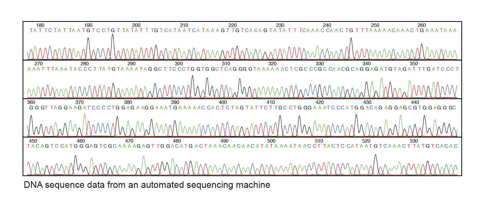 A chart indicating DNA sequence data from an automated sequencing machine.