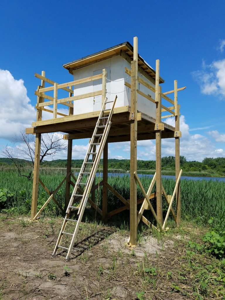 A small shed is up on a wooden platform nearly ten or twelve feet in the air. An extension ladder is used to reach the platform. In the background is a wetland against a partly cloudy blue sky.