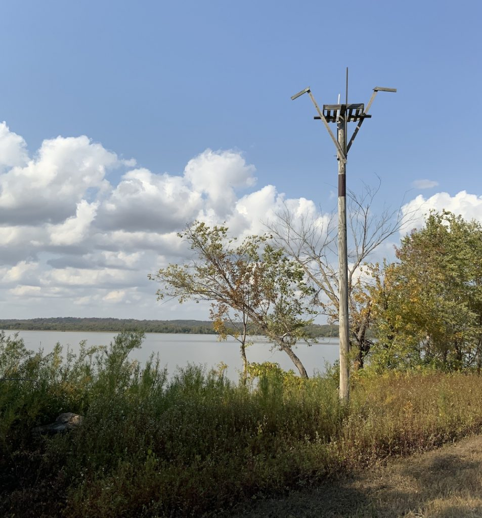 A wooden platform high in the air on a  tall telephone pole is surrounded by grasses, vegetation, and shrubs. In the background is a lake against a partly cloudy blue sky.