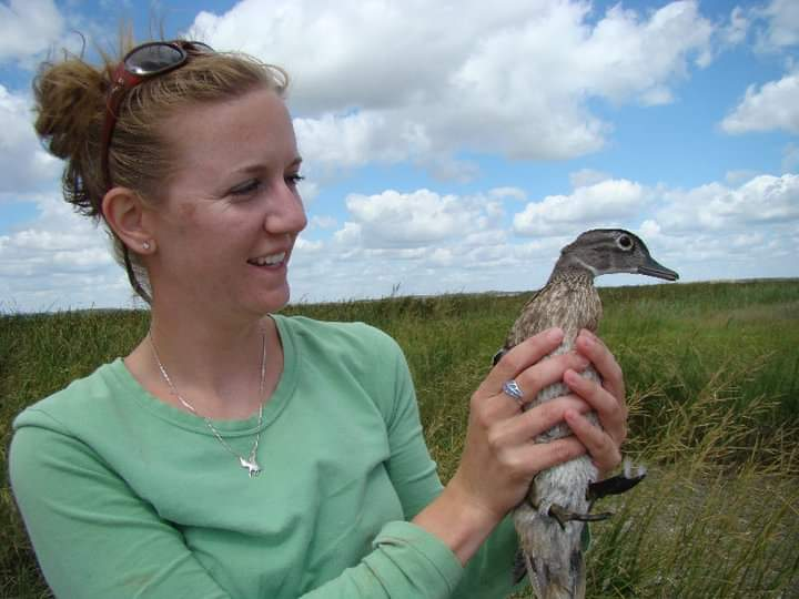 A biologist in a green sea foam shirt holds a mottled brown female wood duck. In the background is a grassland against a partly cloudy blue sky.