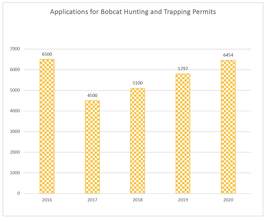A bar graph indicating applications for bobcat hunting and trapping permits from 2016 to 2020.