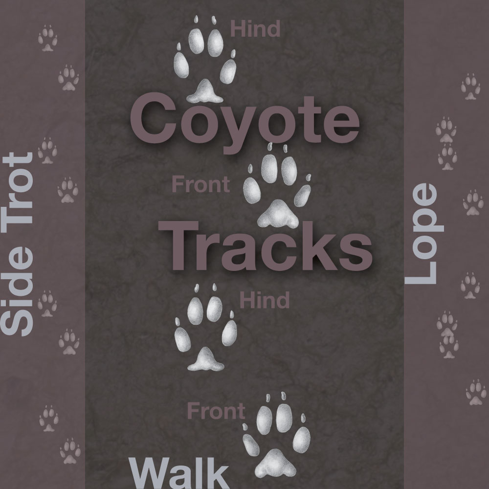 A brown graphic indicating tracks left by a coyote.
