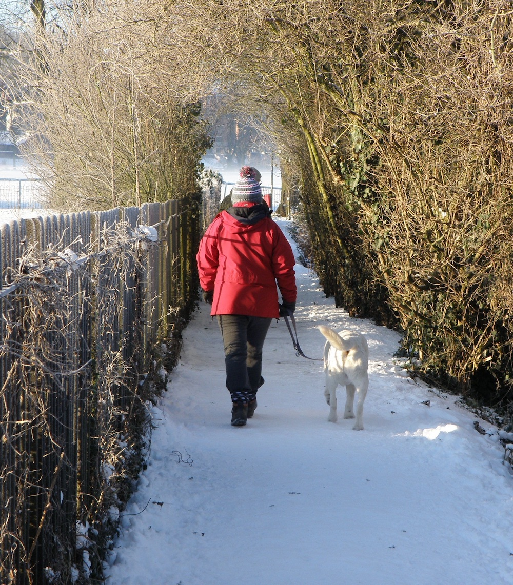 An individual in a red coat, warm knitted hat, and snow boats walks a white dog down a snowy trail. A wooden fence is to the left and brush is to the right.