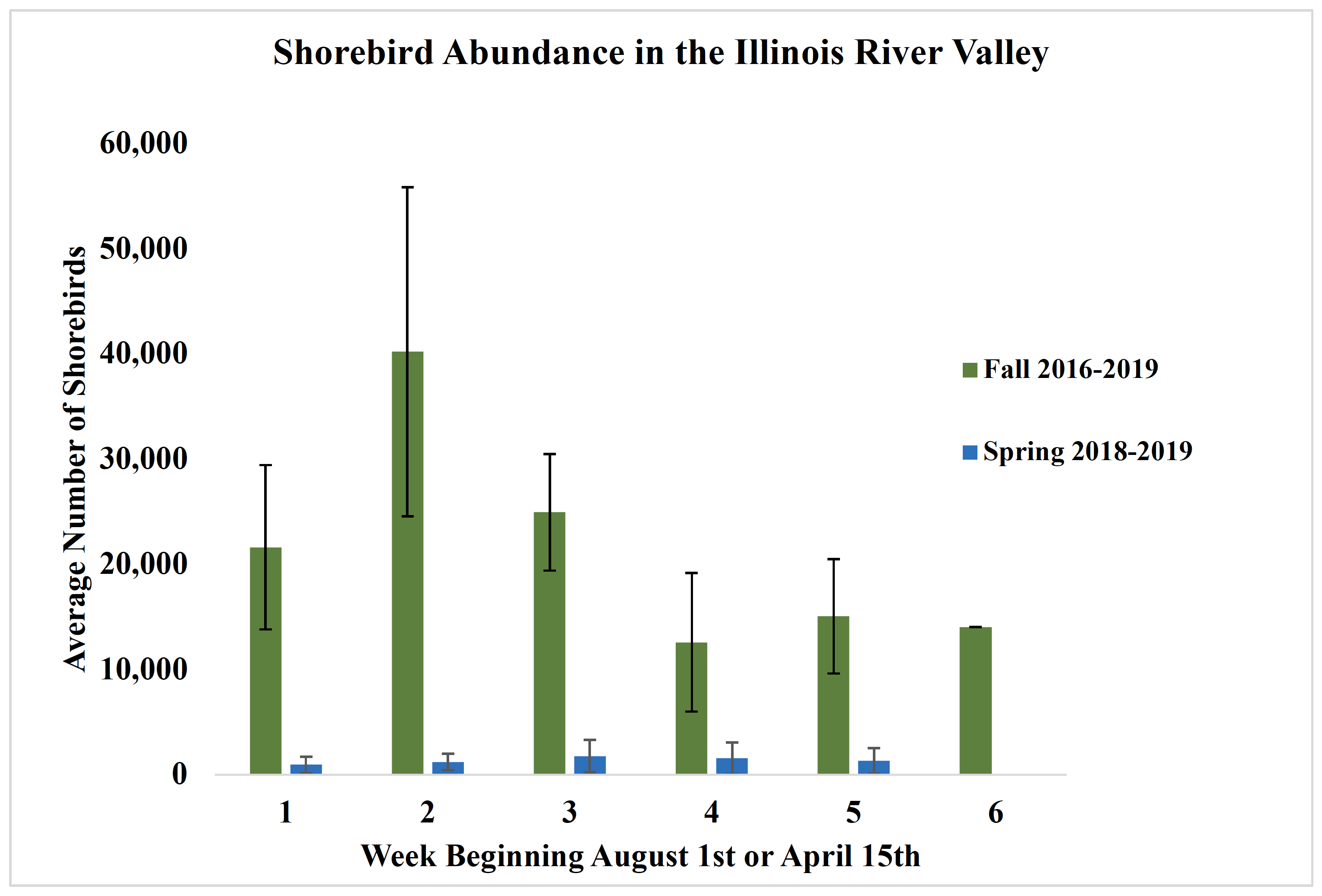 A bar graph indicating the average number of shorebirds estimated per week during aerial surveys in the fall 2016-2019 and spring 2018-2019 in the Illinois River Valley.