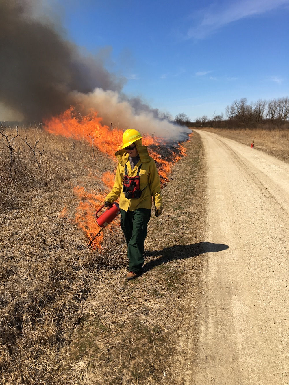A biologist in flame-retardant gear is conducting a prescribed burn on a grassy natural area. She spreading fire along the edge of the natural area.