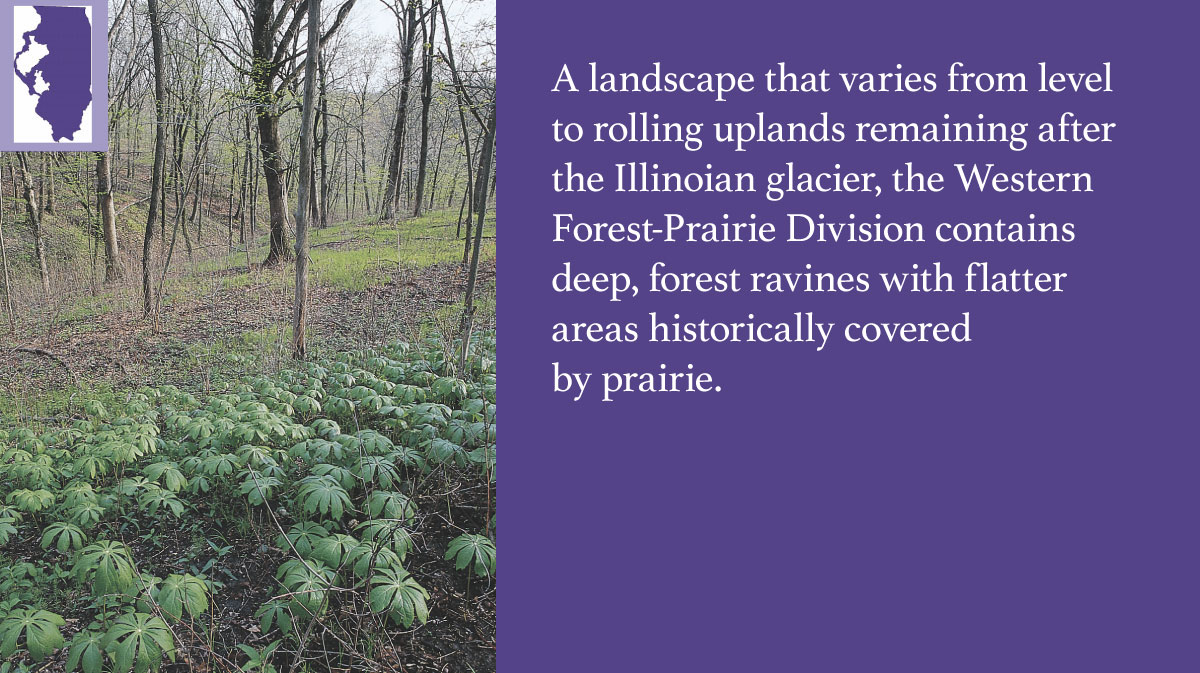 A graphic indicating the Western Forest-Prairie Division of Illinois.