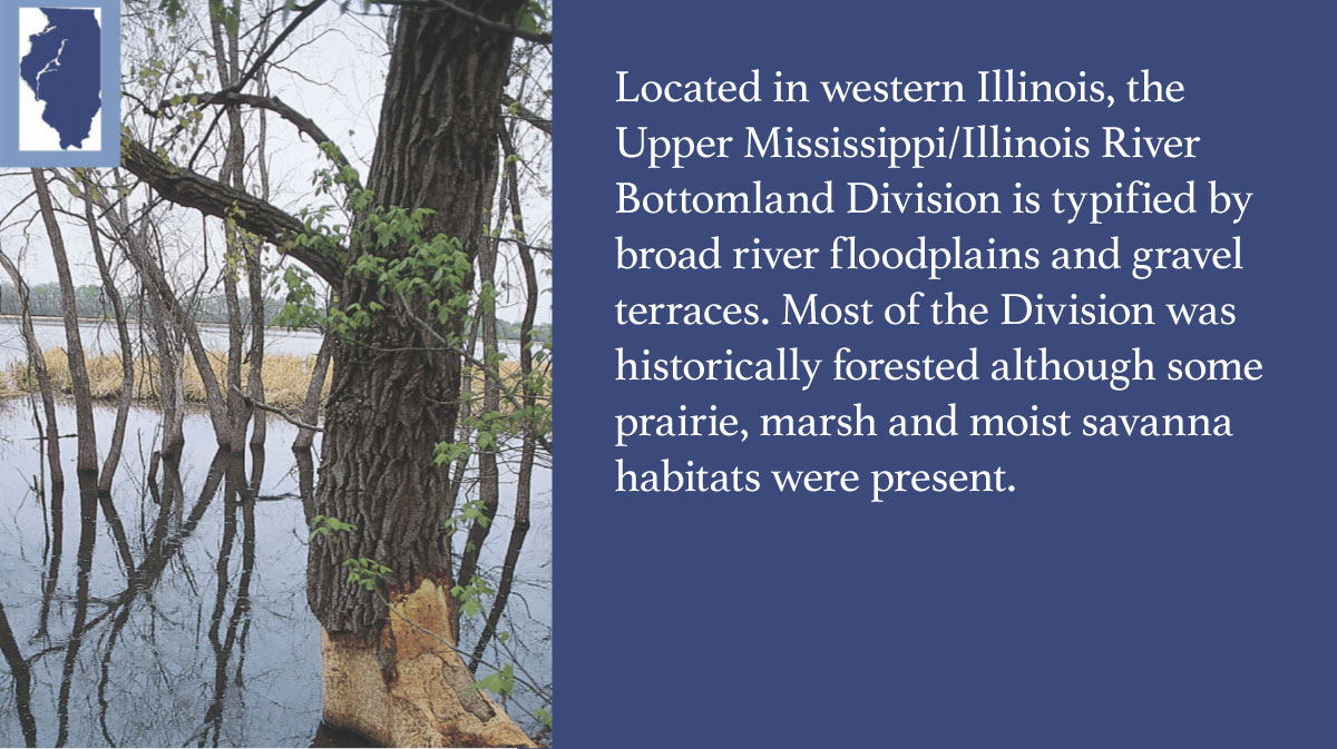 A graphic indicating the Upper Mississippi/Illinois River Bottomlands Division of Illinois.