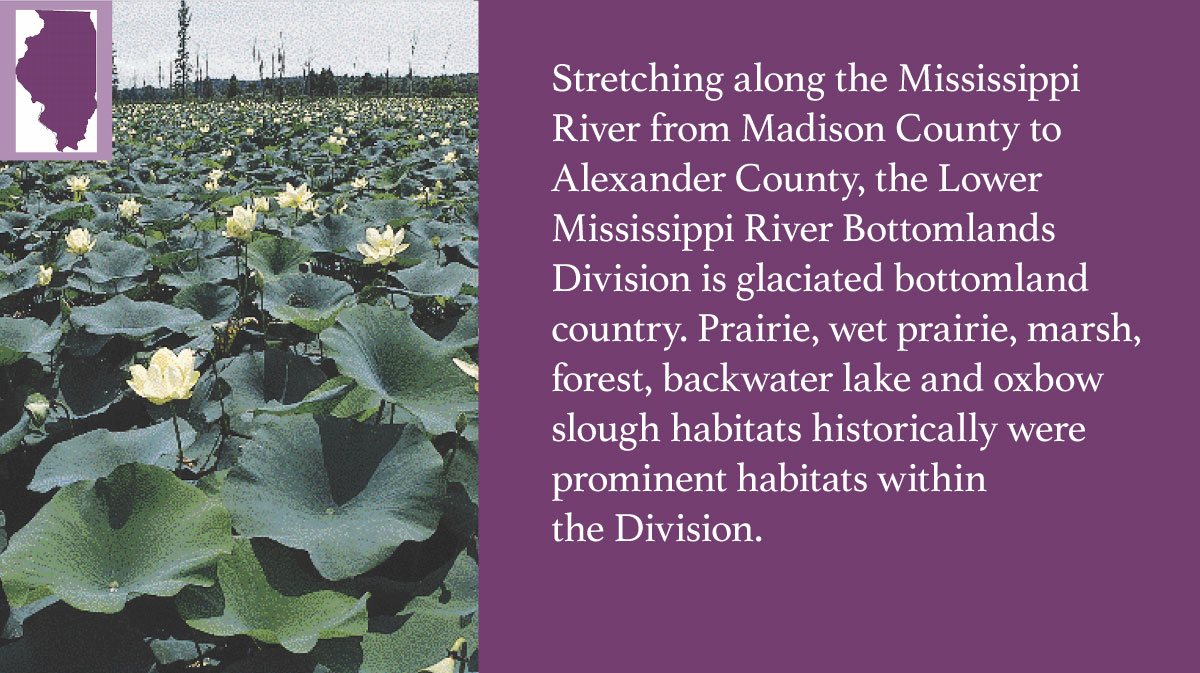 A graphic indicating the Lower Mississippi River Bottomlands Division of Illinois.