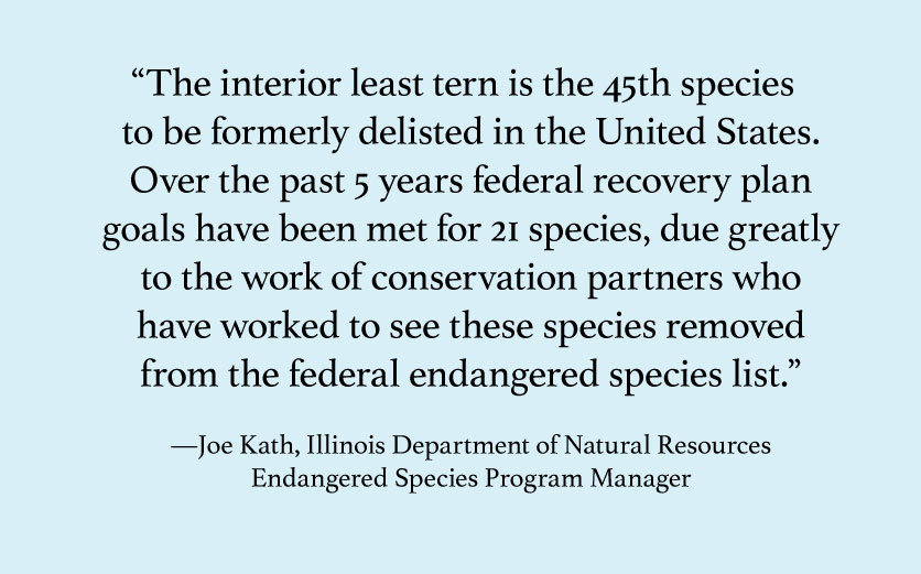 A graphic of a quote by a scientist with the Illinois Department of Natural Resources describes how a shorebird's population has improved enough to take it off the federal endangered species list.