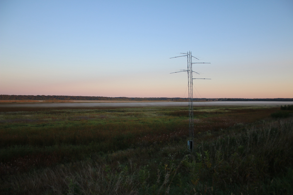 A metal communications tower stands near a wetland in the summertime. The tower is against an evening sky.