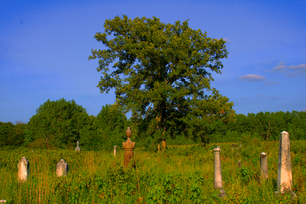 A small, old cemetery provides haven to a remnant prairie ecosystem. A large oak tree against a blue sky is in the background.