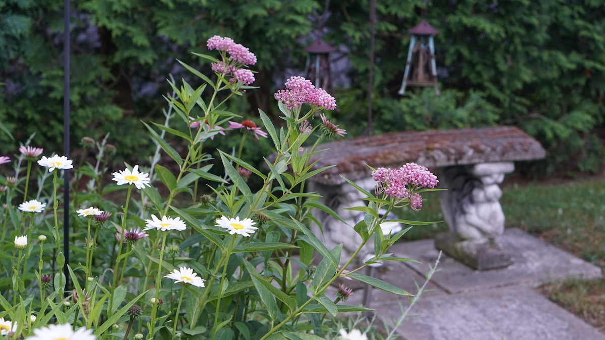 A backyard garden with pink and white flowers in the foreground, a concrete bench in the middle-ground, and bushes in the background.