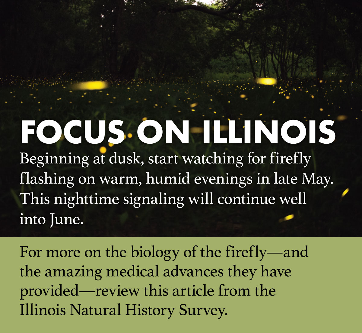A graphic with a photo at dusk of fireflies flashing over a grassland with trees. The text indicates when to watch for firefly flashing in Illinois and where to go for more information.