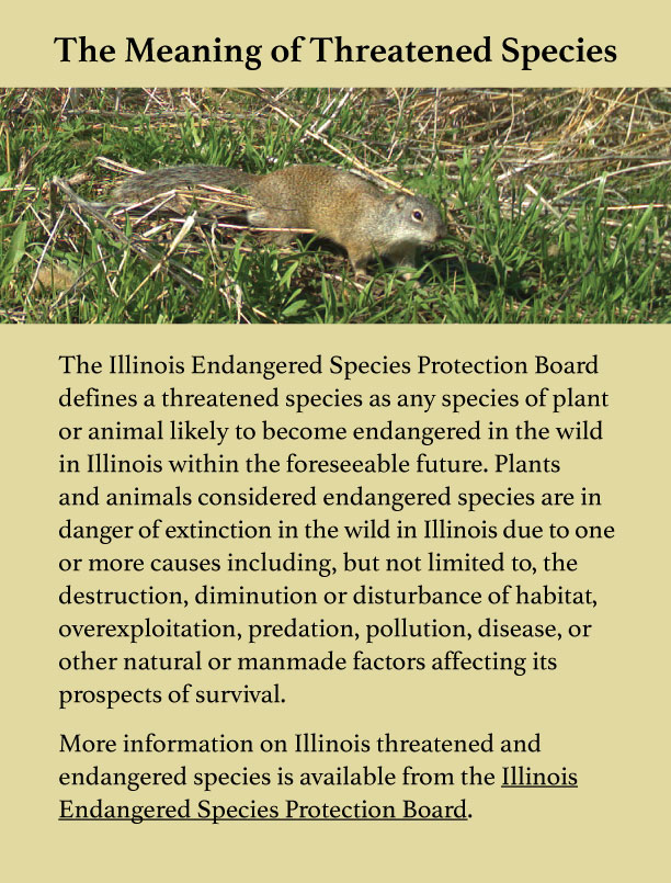 A graphic explaining the meaning of threatened species with an image at the top of a brown ground squirrel on a grassy area.