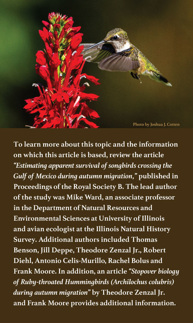 A graphic indicating where to get more information on the topic of hummingbird migration. There is a photo of a green and white hummingbird sipping nectar in mid-air from a group of red flowers.