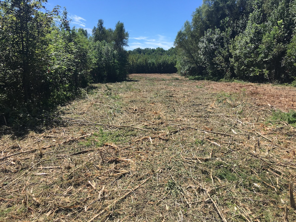 A clearing in a bottomland for woodland restoration purposes. A blue sky and trees are in the background.