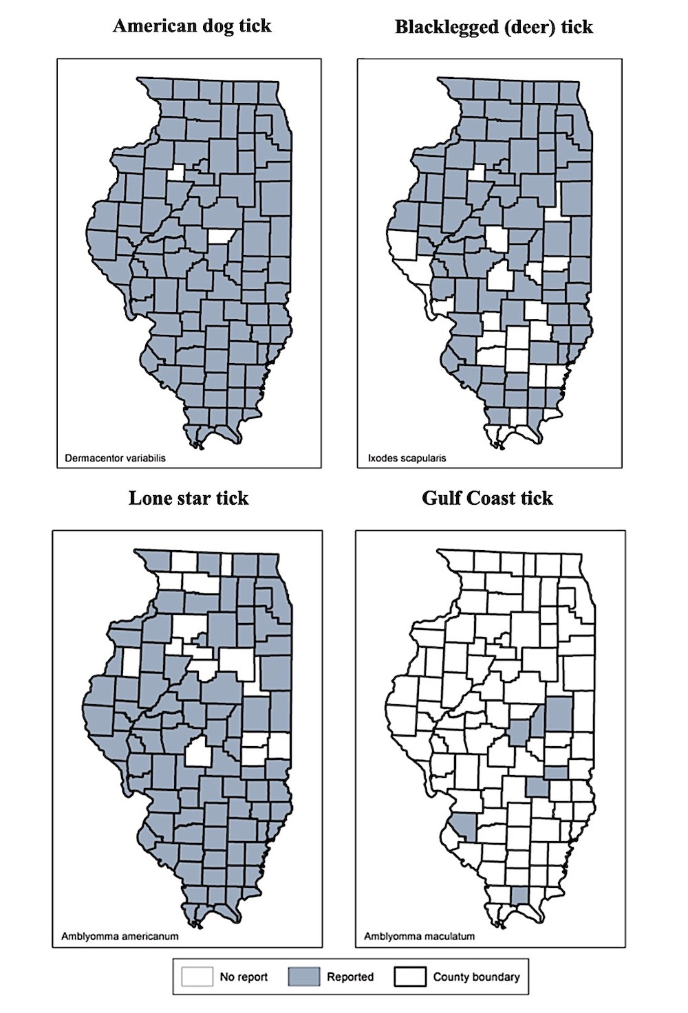 A gray scale graphic with four maps of Illinois indicating the presence of the American dog tick, the Blacklegged (deer) tick, the Lone star tick, and the Gulf Coast tick in Illinois.