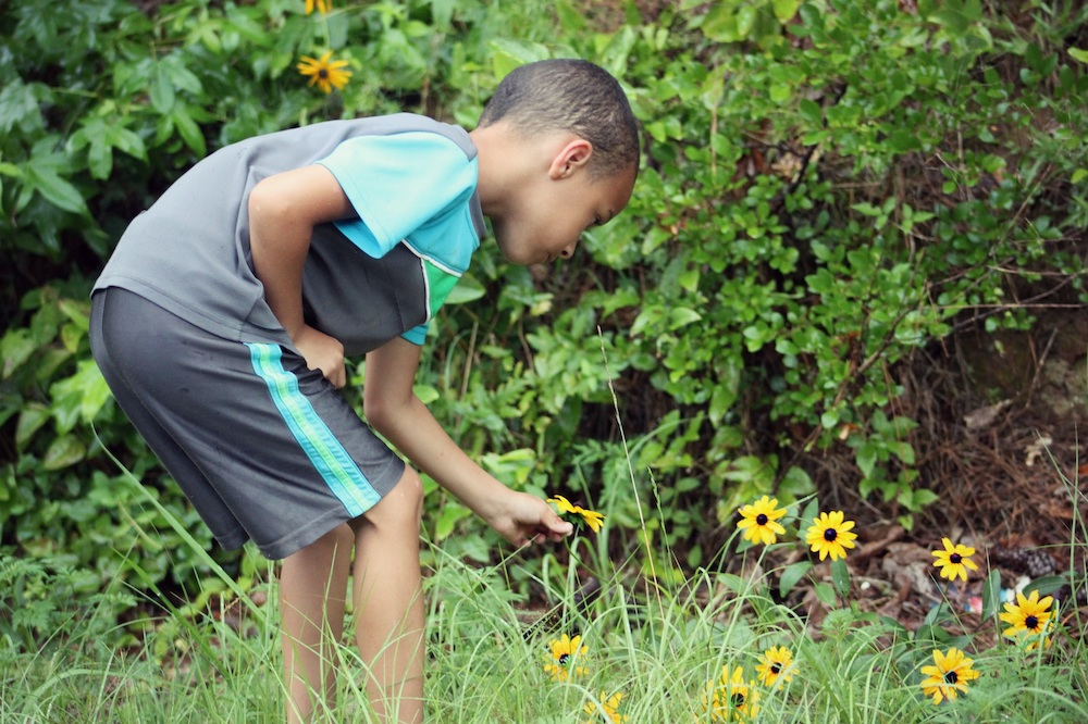 A young boy in a grassy area is bending over to pick a yellow prairie flower. In the background are green bushes.