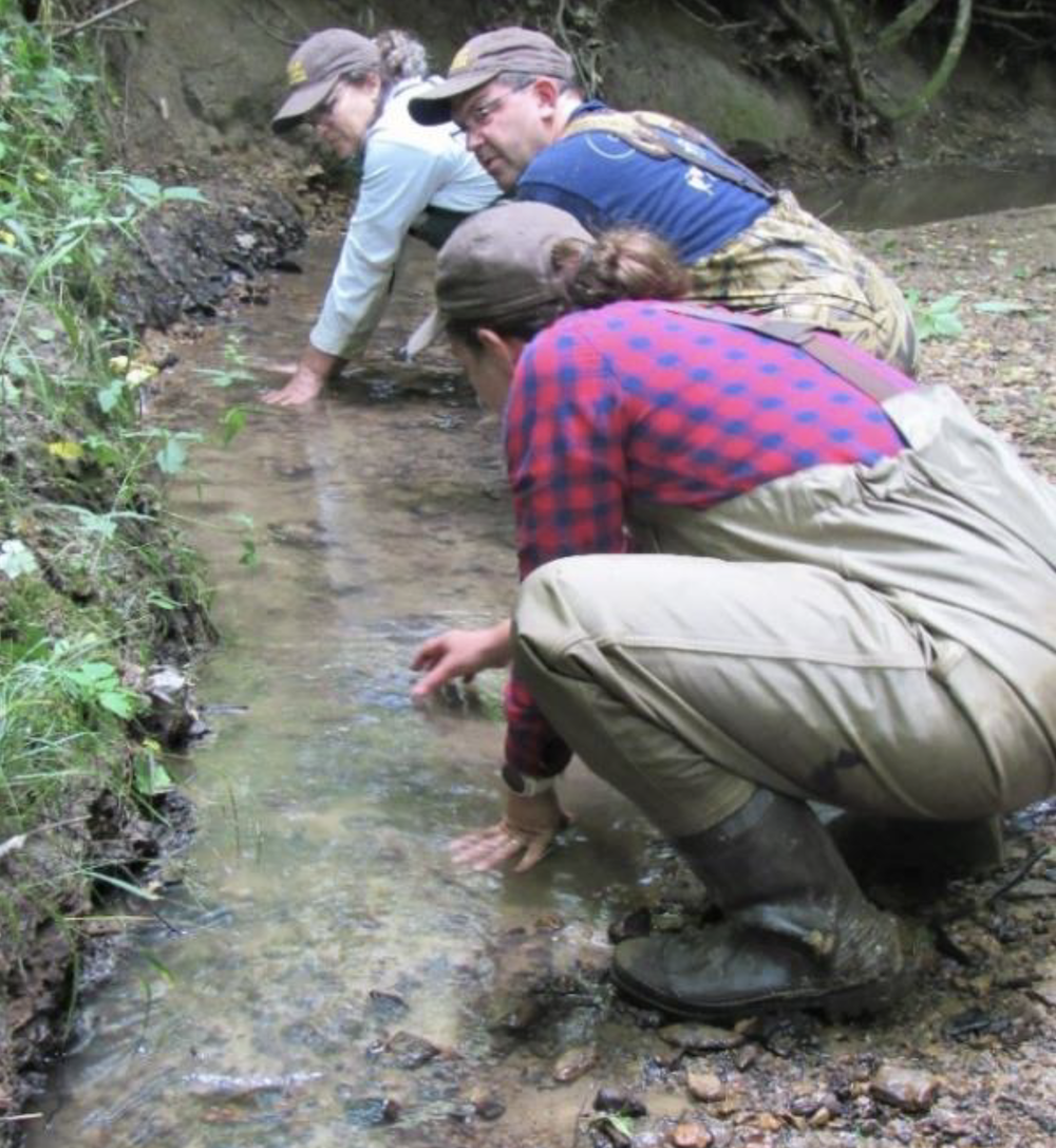Three biologists turn over rocks in a shallow water creek bed looking for salamanders.