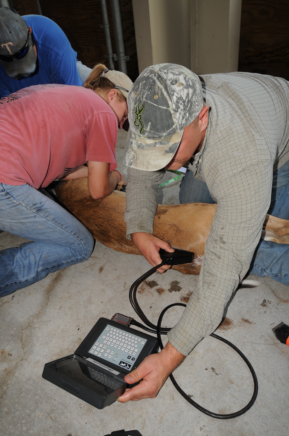 Three researchers kneel next to a white-tailed deer. One of the biologists holds an electronic device with a cable in one hand and the other hand holds the end of the cable agains the deer.