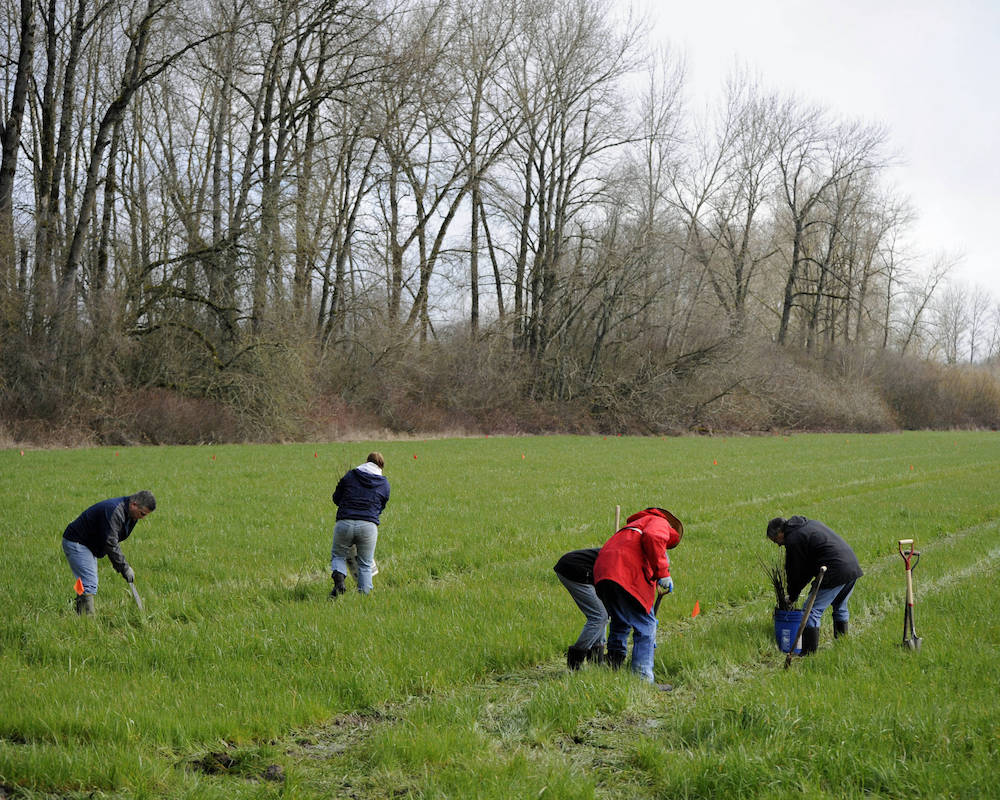 A group of people with shovels are bending over to plant trees in a grassy area. Trees and shrubs are in the background.