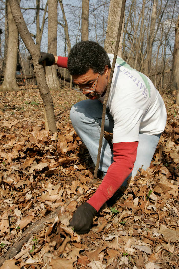 An individual surrounded by leaf litter bends down to pull a seedling from a winter woodland. Trees are in the background, and a blue sky can be seen in-between tree trunks.