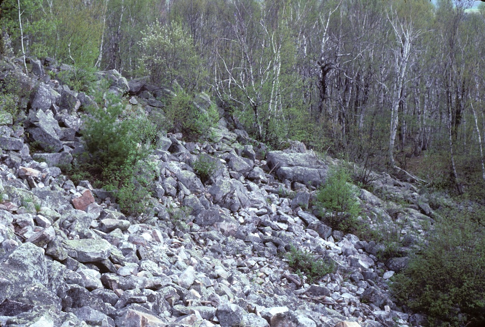 A rocky slope with intermittent shrubs growing in-between the rocks, and there is a forest in the background.