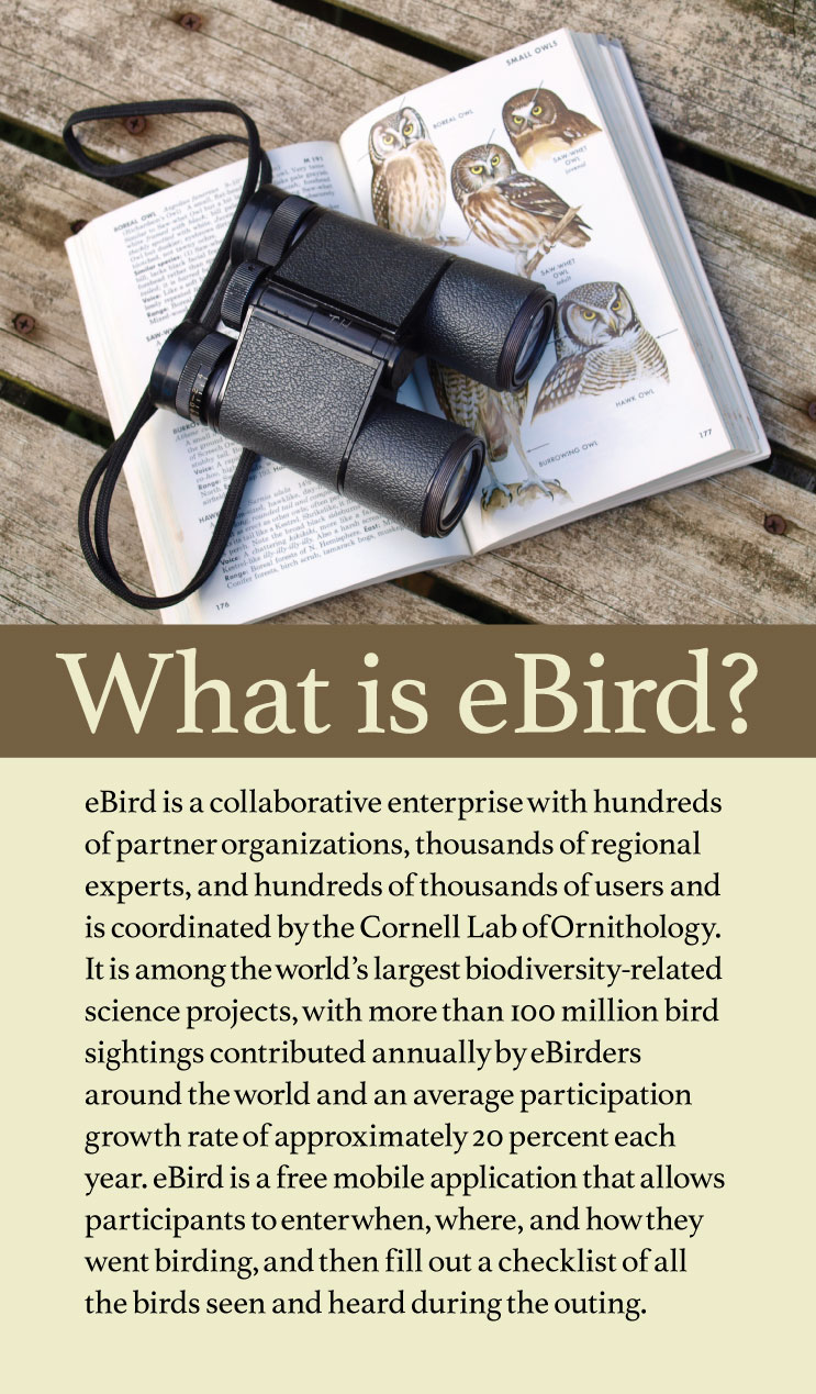 A graphic with a photo at the top with a bird guide book opened to the owl section with a pair of binoculars sitting on top of the book. Below the photo is some text describing the online research collaborative tool, eBird.