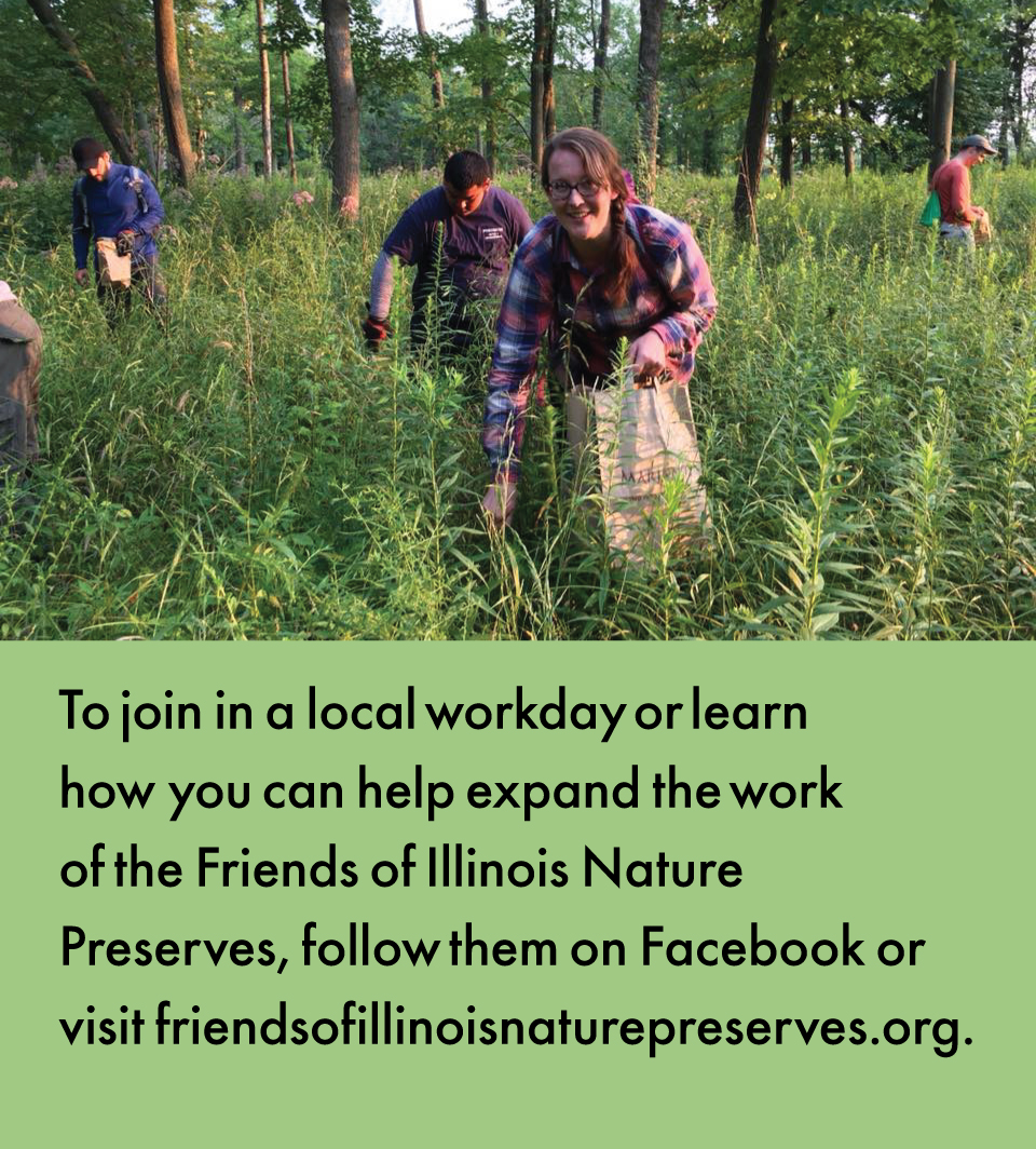 A scene of a group of individuals collecting seeds in a lush green summer savanna. Below the photo is text explaining to learn more or join a local workday follow Friends of Illinois Nature Preserves on Facebook or visit  friendsofillinoisnaturepreserves.org.
